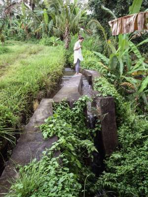 Site Practice - The subak, a local ecological irrigation system.